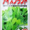 「アイスプラント」を水耕栽培。大きくなったら液肥に塩を入れて育てる予定です