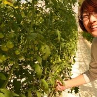 とりたてのトマトの美味しさを広めたい(三須美智子さん/千葉県)