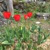 春の庭で宝探し