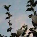 星降る夜に願うこと -もちのブログ-