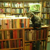 自宅最寄りの書店が無くなって恐ろしく不便になった