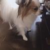 愛犬シェリー