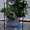 栽培スタイル:植物の水やりを自動化する(垂直式パイププランター)