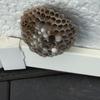 浜松市西区で壁面にできた蜂の巣を駆除してきました