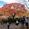 昭和記念公園で紅葉