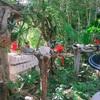 ファミリーにもおすすめなシカレパーク|メキシコ旅ノート4
