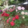 大根島・由志園の花と情景 8(島根県松江市)