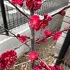開花が進んだよ!&鉢植えでも育つよ^ ^