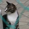 6月19日 近所の猫さま散策 & 茨城へお出かけ