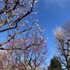 春めきプレイリスト・Daft Punk解散の衝撃【今週聴いたおすすめ音楽ピックアップ】