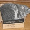 「箱猫」  写真の撮影機材は OLYMPUS SP800UZ