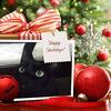 ◆メリークリスマス2016&今日のニャンコ