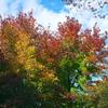 木場公園の紅葉