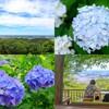 あじさい、開放的な景色、茶屋とみどころたくさん!!栃木県大平山の謙信平におでかけ