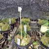 富貴蘭の無加温ラン小屋で竹串とコードフックと遮光ネットでの防寒の工夫のお話です。