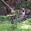 我が家の小さな庭に来る可愛い野鳥たち