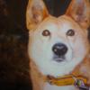 ポチとその思い出。犬のために作った歌。