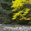 北海道の秋は黄色がきれい