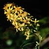 10 月20日 誕生日の花と花言葉 歌句