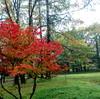日光湯元ビジターセンターの紅葉はピークを過ぎる。