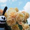 春のお散歩:元気でパッと明るくしてくれる黄色いバラ