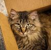 シュレーディンガーの猫 量子力学の思考実験