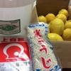 手作りしてみよう♪レモン酵素ジュースの作り方