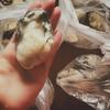 美味しい広島の牡蠣が食べたい人に絶対おすすめ*大粒*冷凍*楽天の食品通販