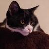 今日の黒猫モモ&白黒猫ナナの動画ー606