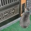 ペットドア 猫用 自作 引き戸仕様