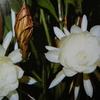 9月29日花と花言葉・歌句