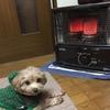とうとう、暖か♡