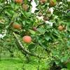 果樹園はインスタ映え狙い目