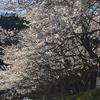 宇宙語が盛んに飛び交う春の交差点♪