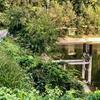大池(和歌山県橋本)