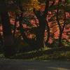 殿ヶ谷戸庭園(とのがやとていえん) ~国分寺駅から徒歩二分で行ける紅葉と新緑の綺麗な庭園~