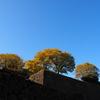 金沢城の紅葉(後編)