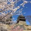 【桜】上田城へお花見