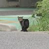 9月25日 足立区足立から弘道までの猫さま とその情景