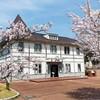【福井】敦賀の桜とスイートピー