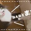 【ねこの食欲 #38】