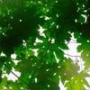 Green rain     緑の雨