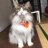 ダイソーの猫首輪をプチカスタム、うちのおばけちゃん(猫)に迷子札(ネームプレート)をつけたよ