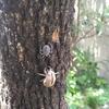 【小ネタ】実家で昆虫観察