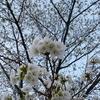 横須賀 彫刻放浪:横須賀→逗子/葉山→横浜(1)