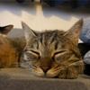 【猫画像】キジトラ猫に勝てる気がしないと悟った日