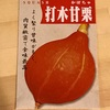 作物No.19 打木赤皮甘栗かぼちゃの栽培〜播種前の浸種の効果は?