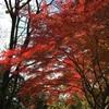 生駒山へ登ってきました