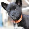 駄犬 黒犬のアンズ 成長記録の写真をまとめてみました。