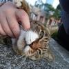 11月前半の #ねこ #cat #猫 その3